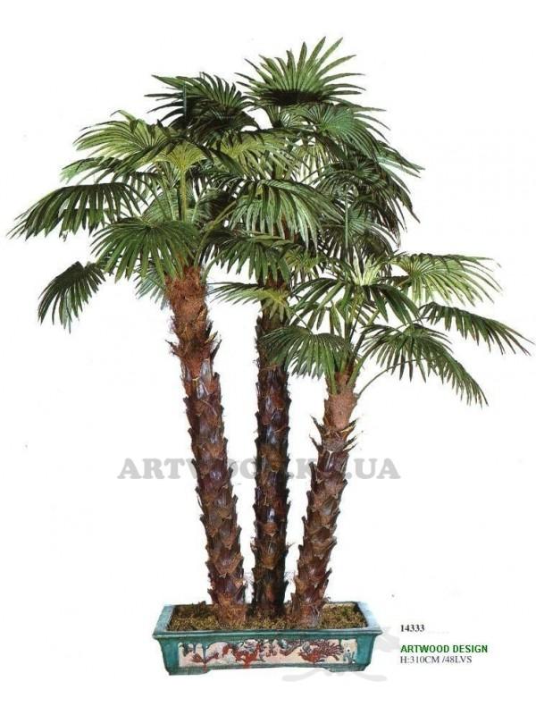 Пальма віялова потрійна